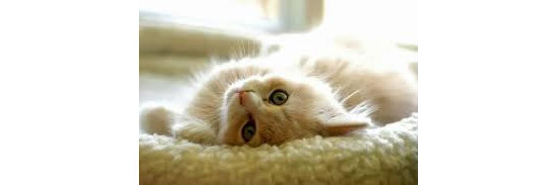 Serviço de Cat-Sistter